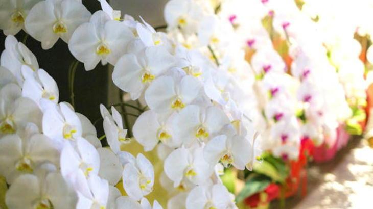 楽屋花に困った時は胡蝶蘭で失敗なしになる法則