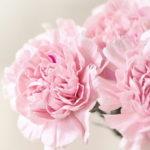 【母の日ギフト】センスがなくてもお花をプレゼントできる!完全お任せのカーネーション花束が人気