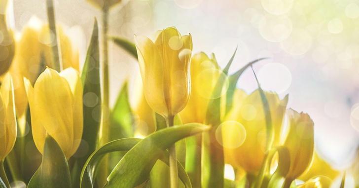 玄関に黄色いお花を置くならコレ!可愛い花束とアレンジメント紹介します