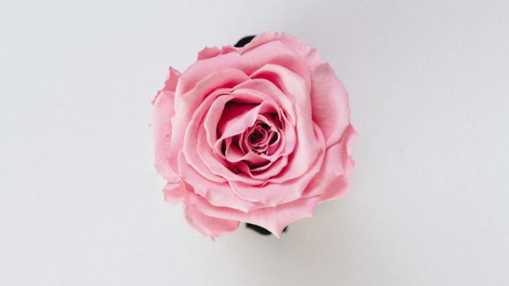 一輪で購入できるネットのお花屋さん|オススメはお手紙に添えるという方法