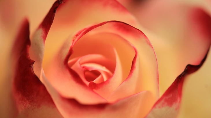 大切な人にこそ最高の楽屋花を|プリザーブドフラワーで選ぶ花ギフト