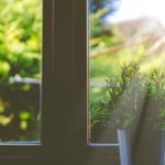 引越し祝いに観葉植物とお花ギフトのセット|最新の人気プレゼント情報