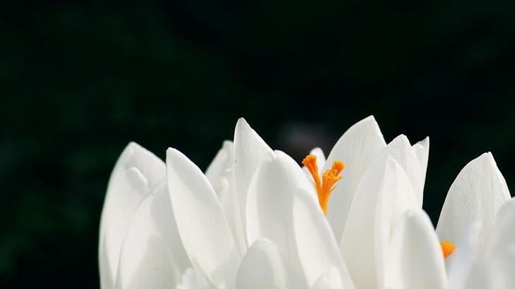 月命日に合わせて届く!お仏壇・お墓に新鮮な供花を供えるための定期便がオススメ