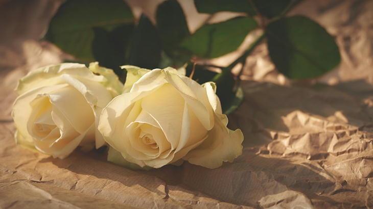 お墓参りの時の供花について|トゲのあるお花はNGなの?