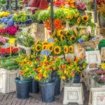 フラスタ初心者必見!パネル付きスタンド花の作法とオススメの花屋について