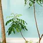【運気別】観葉植物を風水で選んで希望通りの生活を叶える方法