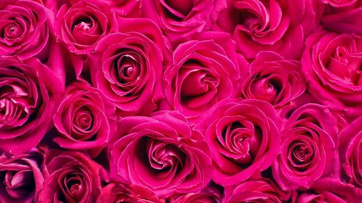 スプレーバラの花束を探している方必見!贈る意味とおすすめフラワーショップ